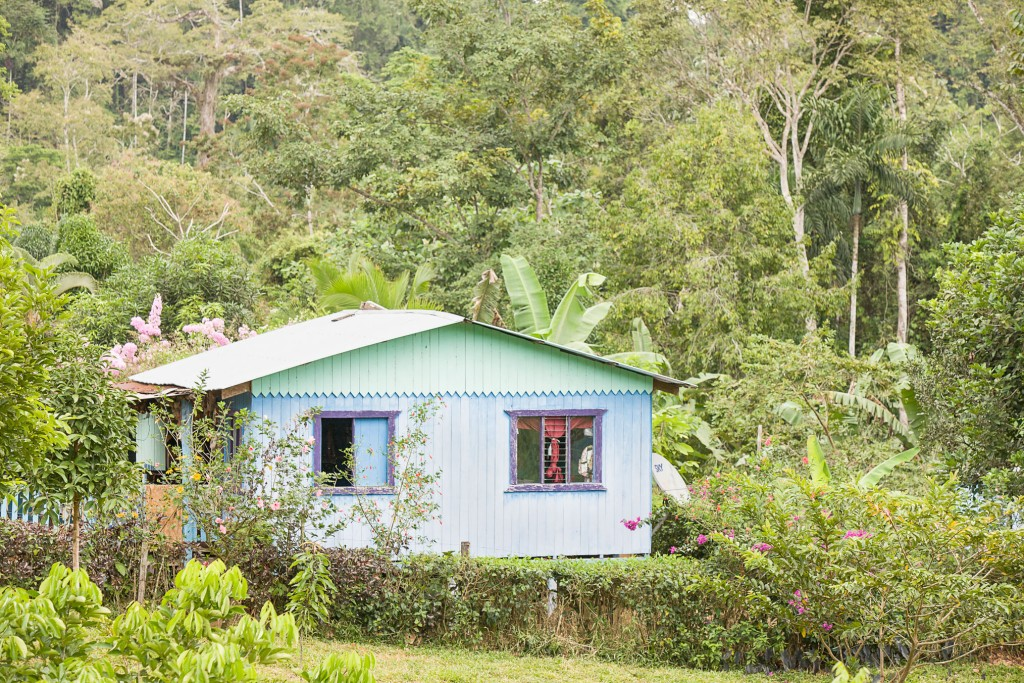 Home, Environmental tax to maintain forests in Costa Rica - If Not Us Then Who?