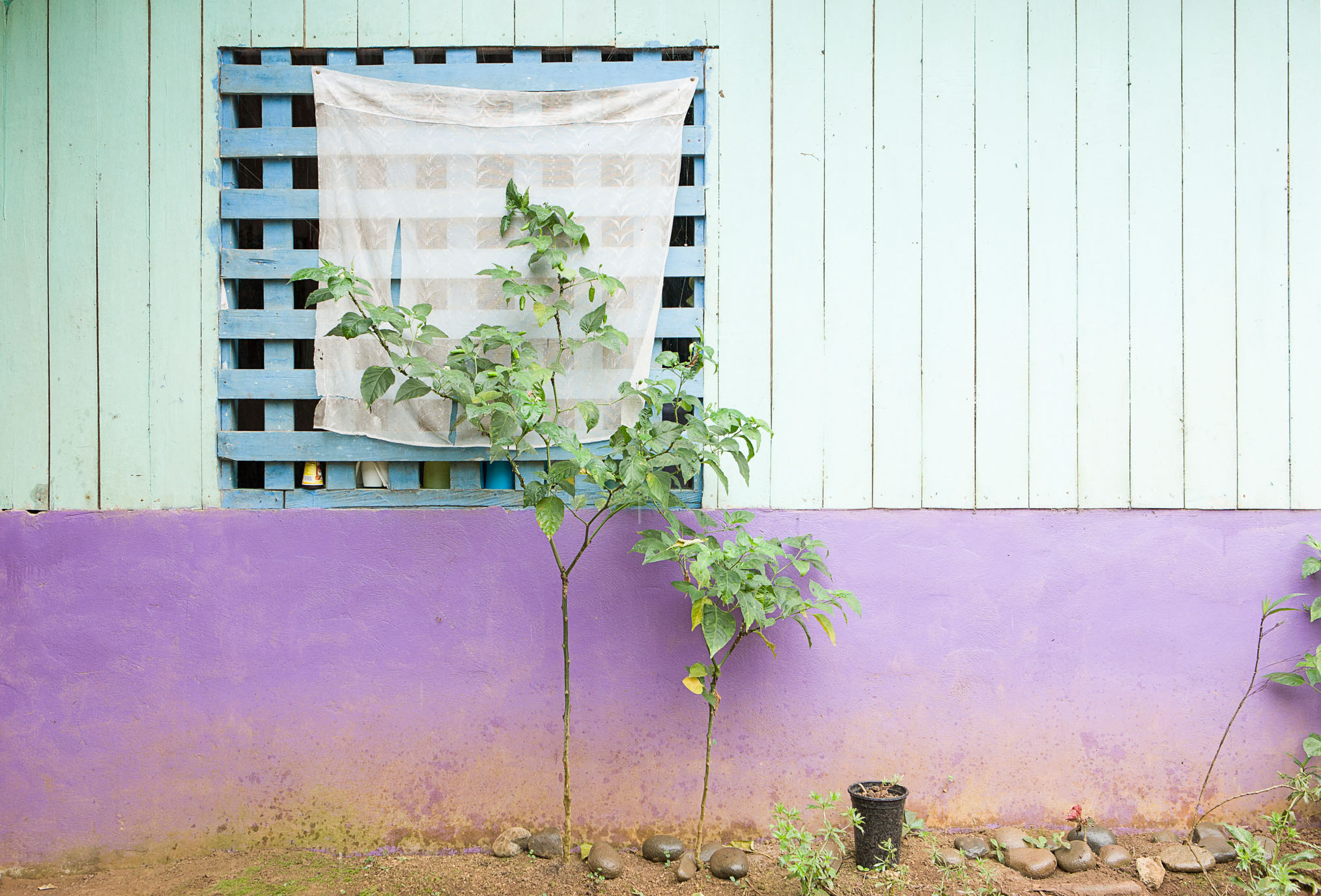 Plant and trees outside the home, Environmental tax to maintain forests in Costa Rica - If Not Us Then Who?